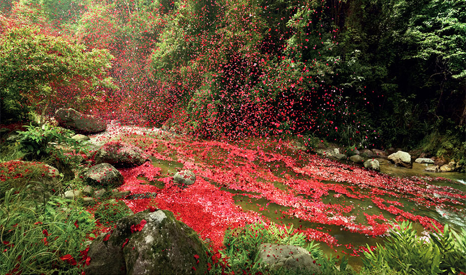 flower-petals-sony-4k-ultra-hd-advertisement-campaign-costa-rica-2