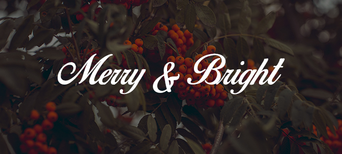 birds_of_paradise free holiday fonts